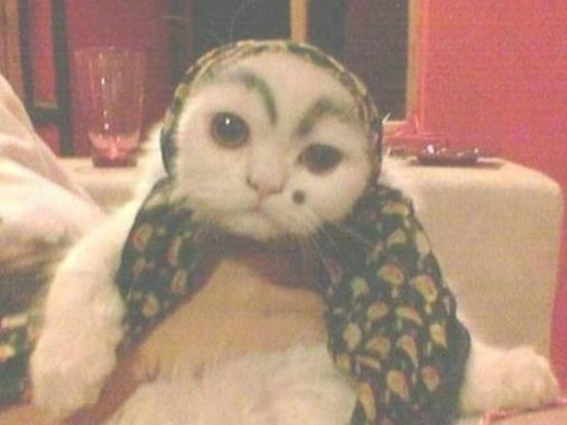 Komik Kedi Fotoğrafları Komikim
